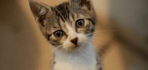 mačky trnava